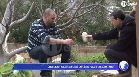 """""""المتة"""" مشروب لاتيني إرتحل إلى لبنان في أمتعة المهاجرين"""
