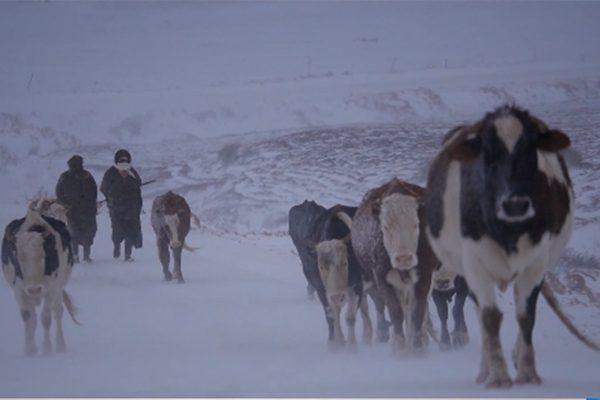 الأغواط: تساقط الثلوج بأفلو يعزل سكان الأرياف