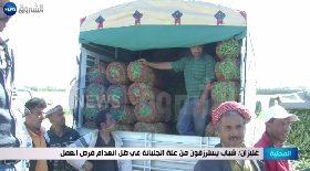 غليزان / شباب يسترزقون من غلة الجلبانة في ظل إنعدام فرص العمل