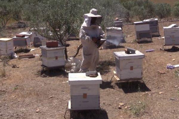 برج بوعريريج: الجفاف يتسبب في نفوق النحل والفلاحون يستغيثون