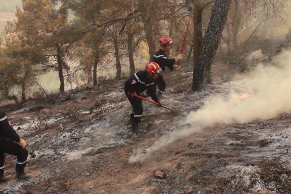 أرقام رهيبة في حصيلة أولية لحرائق الغابات