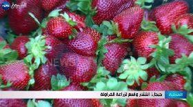 جيجل / إنتشار واسع لزراعة الفرولة