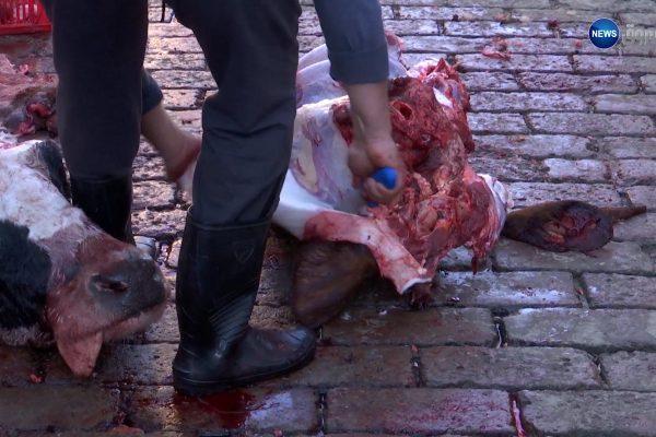 صادم  تقطيع اللحم وسط الفضلات بمذبح رويسو