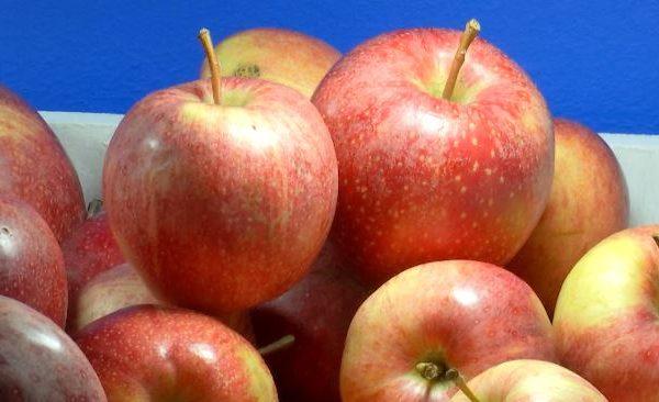 ازمة تضرب قطاع تصدير التفاح البولوني بعد حظر الجزائر لعمليات استيراده