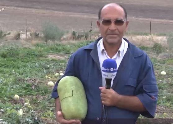 برنامج مراسلون: الدلاع يزاحم الفواكه الآخرى التي تتحول إلى مربى