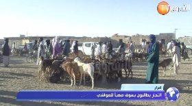 أدرار… التجار يطالبون بسوق مهبأ للمواشي