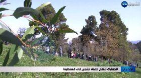 الجمارك تنظم حملة تشجير في قسنطينة