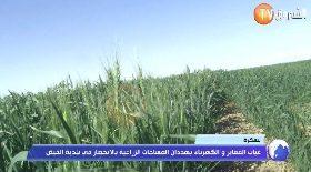 بسكرة..غياب المعابر والكهرباء يهددان المساحات الزراعية بالإنحصار في بلدية الفيض