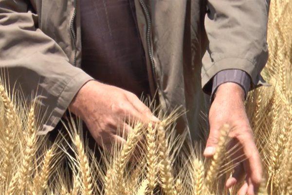 خبراء يقتروح تطبيق استراتيجية تقنية لتخطي استيراد 2.5 مليون طن من الحبوب