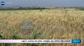 الجفاف يكبد فلاحي عين تيموشنت خسائر في محاصيل الحبوب